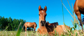 horses_10