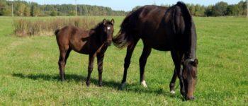 horses_15