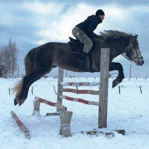 horses_39