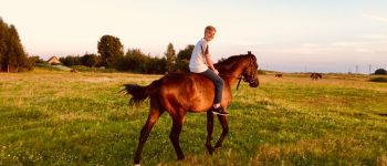 horses_109