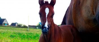 horses_113