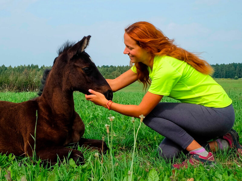 horses_115