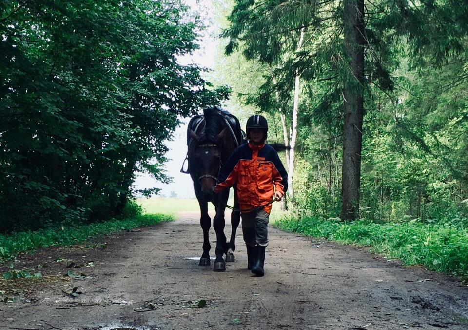 Верховая прогулка в лес