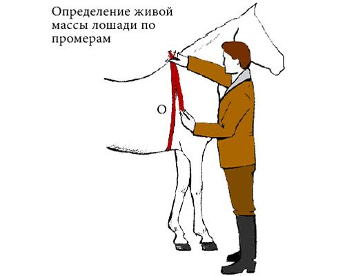 масса лошади в зависимости от промеров