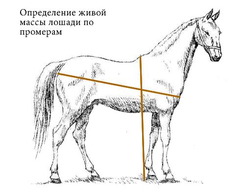 определение массы лошади по промерам